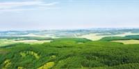 用生命书写绿色传奇  - 林业网