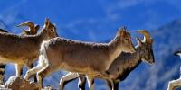 珠峰保护区:野生动物的栖息乐园 - 林业网