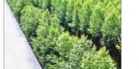 黑龙江省4000余万亩防护林筑起绿色生态墙 - 林业网