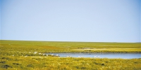让绿色理念根植辽阔的玉树草原 - 林业网