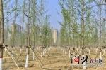 河北省今年已完成营造林326.9万亩 - 林业网