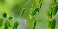 [二十四节气·谷雨]谷雨时节春耕忙 - 农业大学